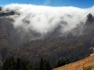 Marin Fog by James Gaither
